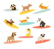 Dog surfers set, vector cartoon illustrations. Dogs breeds on surfboard. Funny Cute dogs. Isolated on white stock illustration