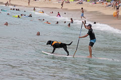 Dog Surfing Stock Photo