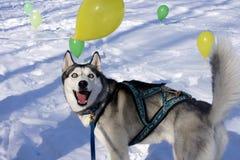 Dog surprised, stunned Stock Photo