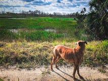 Dog in swamp Stock Photos