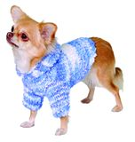 Dog in sweater Stock Images
