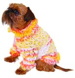 Dog in sweater Royalty Free Stock Photos