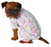 Dog in sweater Stock Photography