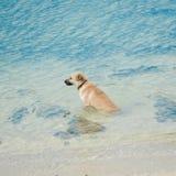 Dog swim beach Stock Image