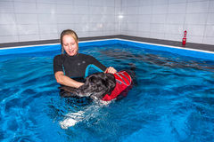 Dog swimming. Therapist with dog in swimming pool Royalty Free Stock Photos