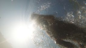 Dog swimming underwater view. Small Toy Terrier male dog swimming in a pool. Camera view underwater showing the paws motion and exit. Dog was refreshed on a stock video