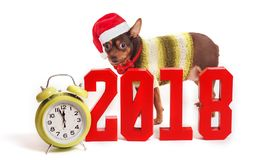The dog is a symbol of 2018 year and numbers.  stock images