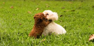 Lovely Dog Couple in the green garden. Dogs are so cute!. Sometimes, they have emotion like people Stock Photos
