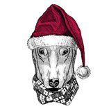 DOG for t-shirt design Christmas illustration Wild animal wearing christmas santa claus hat Red winter hat Holiday Royalty Free Stock Photography