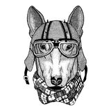 DOG for t-shirt design wearing biker helmet Animal with motorcycle leather helmet Vintage helmet for bikers Aviator Royalty Free Stock Photo