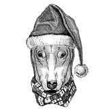 DOG for t-shirt design wearing christmas hat New year eve Merry christmas and happy new year Zoo life Holidays Stock Photography