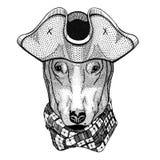 DOG for t-shirt design wearing pirate hat Cocked hat, tricorn Sailor, seaman, mariner, or seafarer Royalty Free Stock Photo