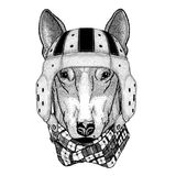 DOG for t-shirt design Wild animal wearing rugby helmet Sport illustration. Wild animal wearing rugby helmet Sport illustration Royalty Free Stock Image