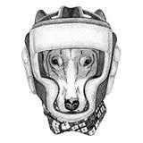 DOG for t-shirt design Wild boxer Boxing animal Sport fitness illutration Wild animal wearing boxer helmet Boxing Stock Images