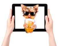 Dog on tablet computer with beer Stock Photography