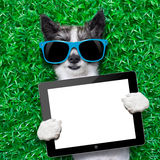 Dog tablet pc Stock Images