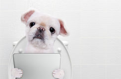 Dog with a tablet pc in a toilet. stock photography