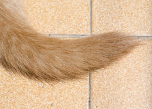 Dog tail Stock Images