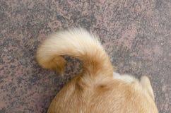 Dog tail Stock Image