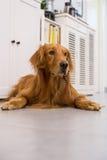 A dog taken indoors Stock Photos