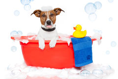 Dog taking a bath royalty free stock image
