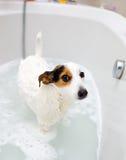 Dog taking a bath in a bathtub Stock Image