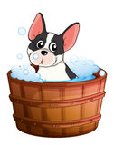 A dog taking a bath Stock Photo