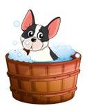 A dog taking a bath Stock Photo
