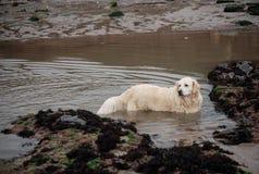 Dog taking bath Royalty Free Stock Photography