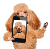 Dog taking a selfie with a smartphone Stock Image