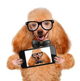 Dog taking a selfie with a smartphone Royalty Free Stock Photo