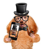 Dog taking a selfie with a smartphone Royalty Free Stock Photography