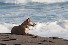 Dog taking sun bath Stock Image