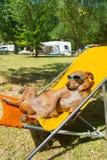 Dog taking sun bath Stock Photo