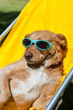 Dog taking sun bath Stock Images