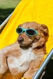 Dog taking sun bath Stock Images