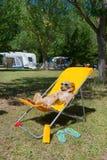 Dog taking sun bath Royalty Free Stock Images