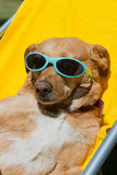 Dog taking sun bath Royalty Free Stock Image