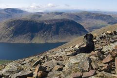 A Dog taking in the view from Grasmoor, Lake District, Cumbria, England royalty free stock photo