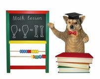 Dog teaches near a blackboard royalty free stock image