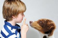 Dog teaching. Boy teaching an australian shepherd puppy stock image