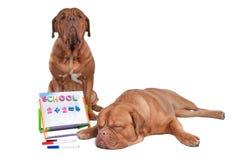 Dog teaching math Royalty Free Stock Photography