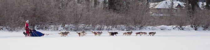 Dog team pulling sled Royalty Free Stock Image