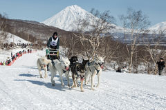 Dog team is running on snowy slopes on background of volcanoes Stock Image