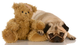 Dog and teddy bear with wounds Royalty Free Stock Images