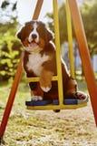 Dog on teeter Stock Photography