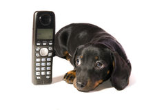 Dog with telephone. Black dog Lays with a black telephone on white background isolated Royalty Free Stock Images