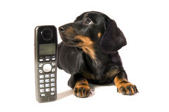 Dog with telephone. Black dog Lays with a black telephone on white background isolated Stock Photo
