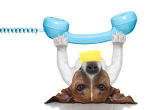 Dog telephone. Dog holding a telephone and a note lying upside down Royalty Free Stock Photography