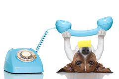 Dog telephone. Dog holding a telephone and a note lying upside down Stock Image